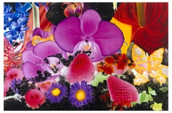 print of brightly coloured flower heads in pinks, purples and reds.