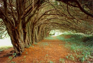 The Yew Walk, Huntington Castle, Conegal, Co.Carlow